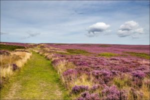 Levisham-Moor-5-Unique-Winter-Walks-In-The-North-York-Moors